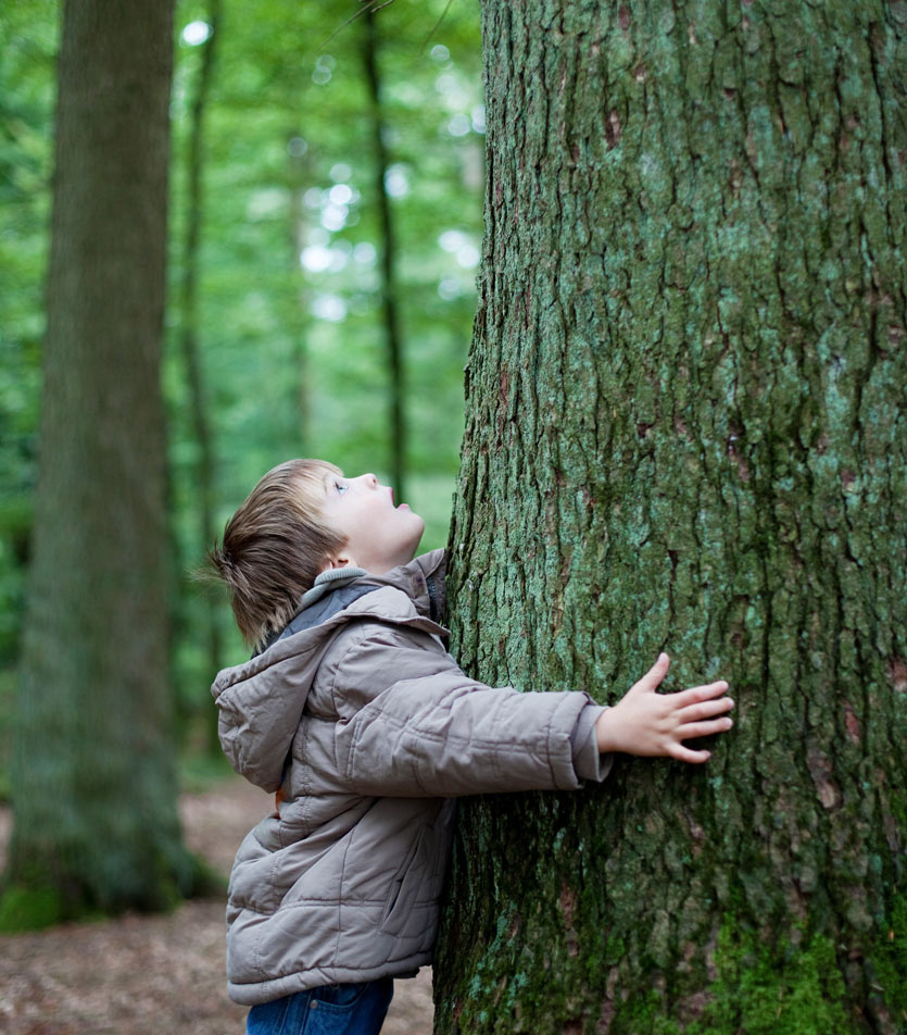 kid hugging tree in forest, looking up into the canopy